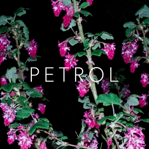 5. Crystalline Stricture - Petrol
